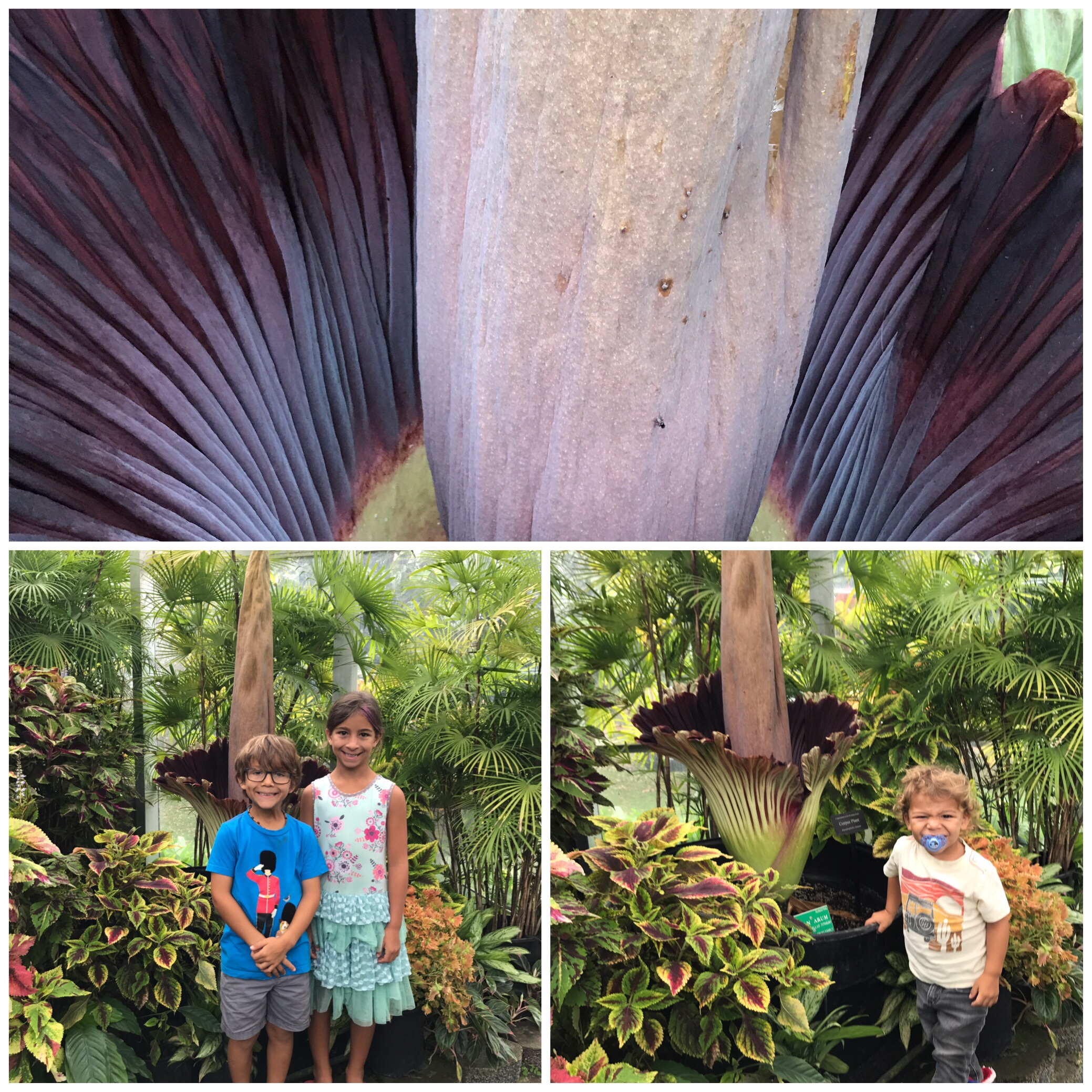 Corpse Flower, Missing Kid , and a Maimed Leg
